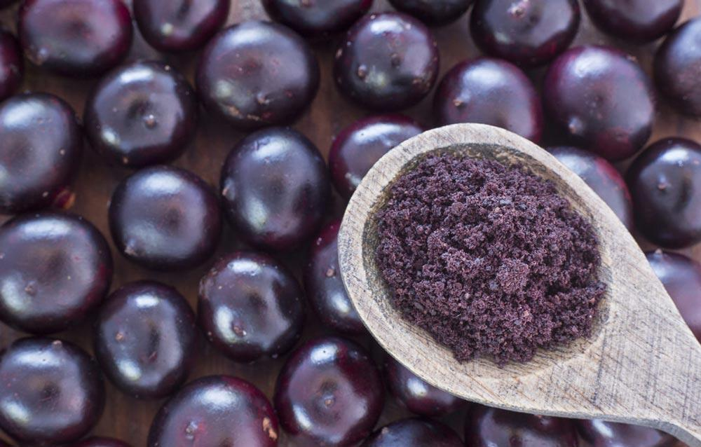Blueberry Powder Phenolics & Anthocyanin