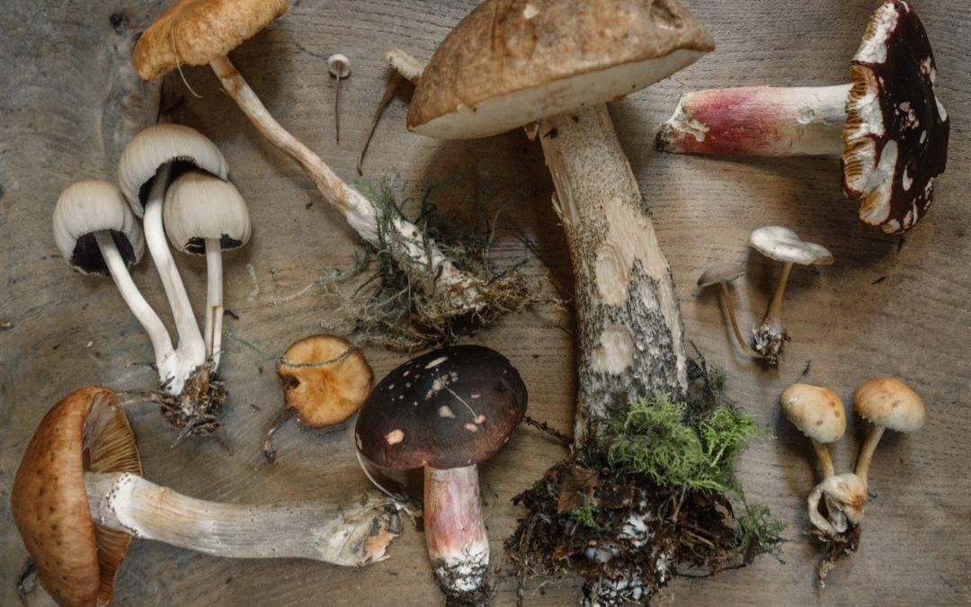 Mushrooms (Cordyceps, Maitake, Reishi, Shiitake)