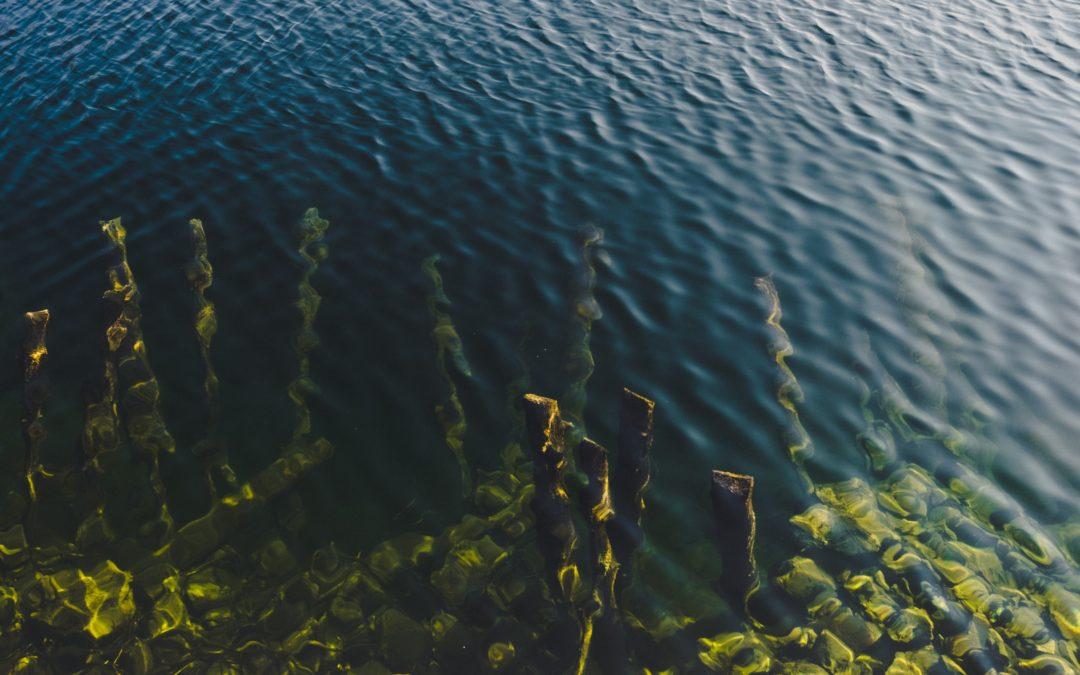 VitaKelp® Hebridean Seaweed